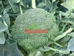 Kup teď Brokolice Apolena F1