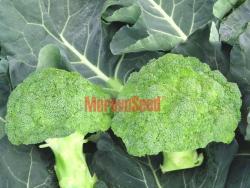 Kup teď Brokolice Leonora