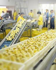 FOODMASTER - potravinářské stroje