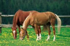 Minerální lizy pro koně