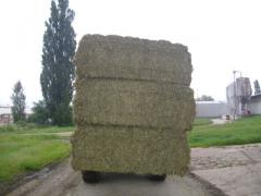 Bales of alfalfa, hay